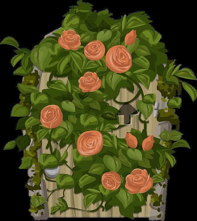 Climbing, Plant.