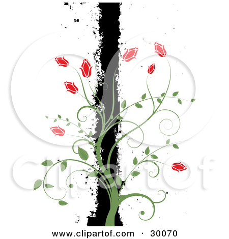 Similiar Climbing Rose Vine Illustration Keywords.