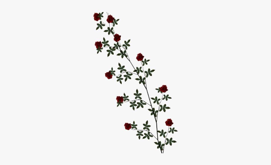 Rose Clipart Vine.