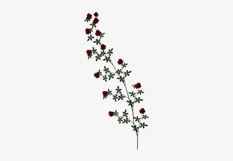 Rose Vines PNG Images.