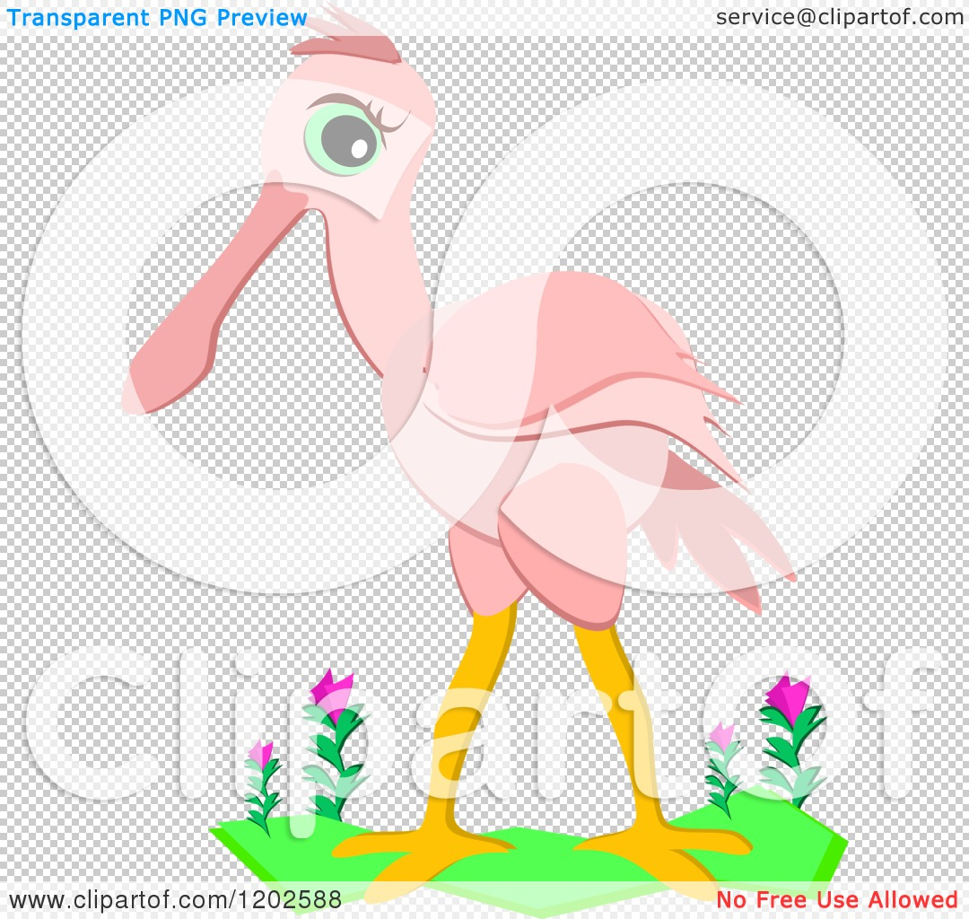 Cartoon of a Cute Pink Roseate Spoonbill Bird.