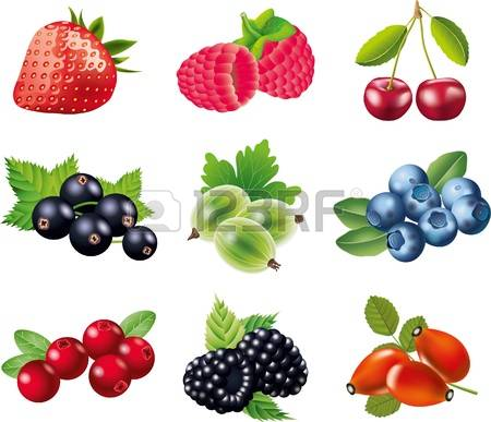 884 Rosehip Cliparts, Stock Vector And Royalty Free Rosehip.