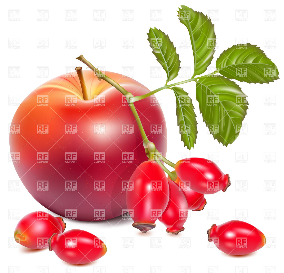 Red Apples and Rose Hips (dog rose hips) Vector Image #4926.