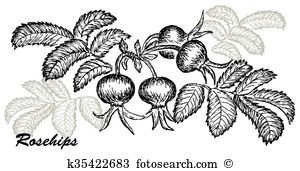 Rosehips Clip Art Illustrations. 61 rosehips clipart EPS vector.