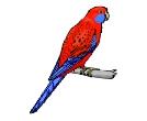 Birds Clip Art free Downloads.