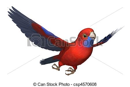Rosella Stock Illustration Images. 34 Rosella illustrations.