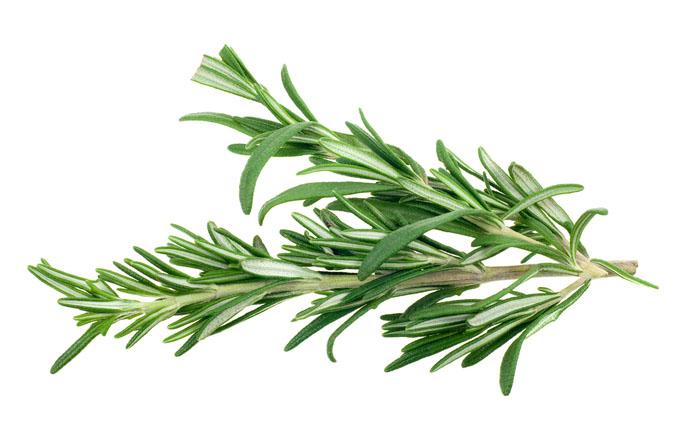 Rosemary clipart.