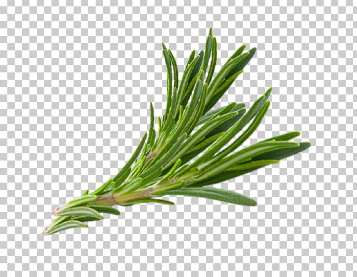 Rosemary Herb Thymes Hair PNG, Clipart, Almond Oil, Food.