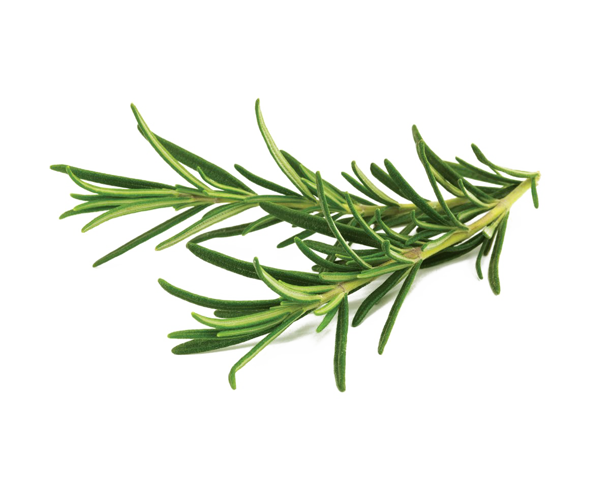 Rosemary PNG Transparent Image.