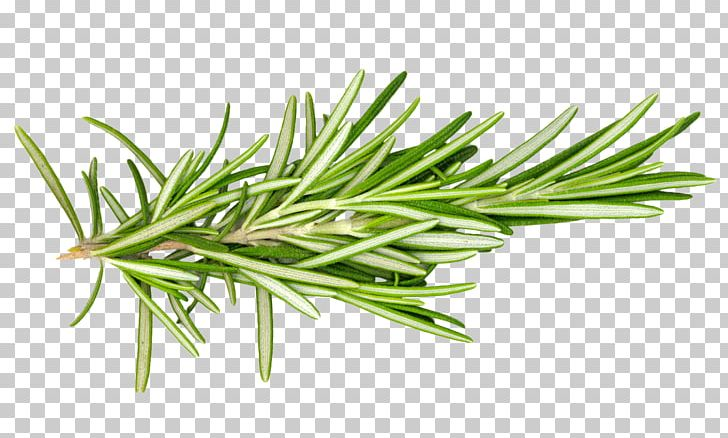 Rosemary Herb Leaf Spice Food PNG, Clipart, Commodity.