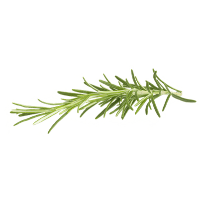 Rosemary transparent PNG.