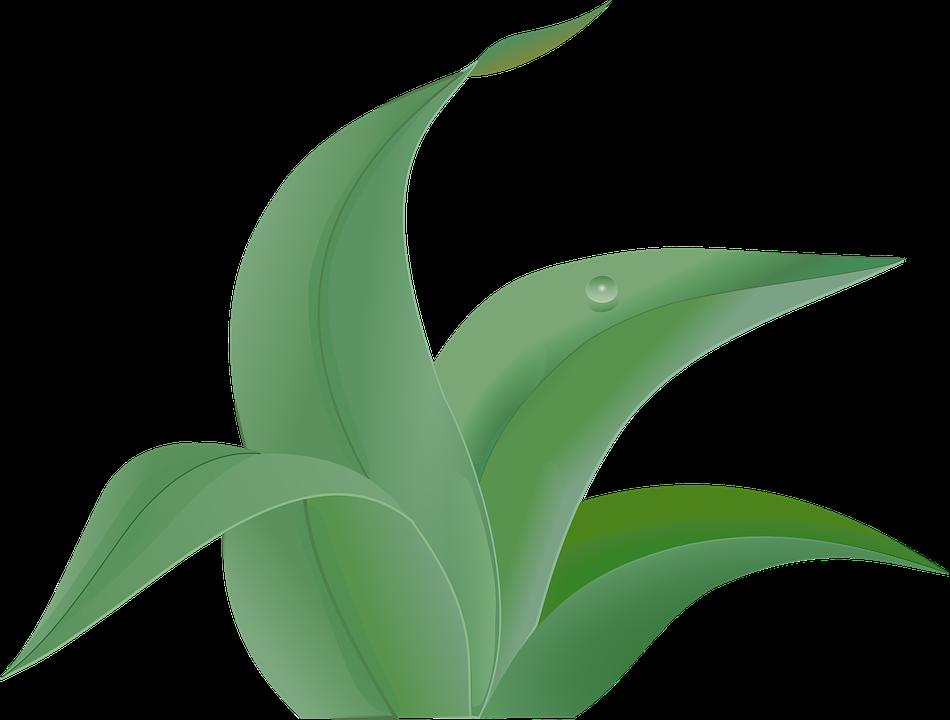 Greenish.