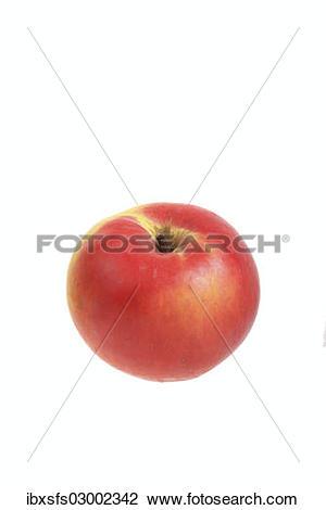 "Stock Photo of ""Apple, Ditzel's Rose Apple variety"" ibxsfs03002342."