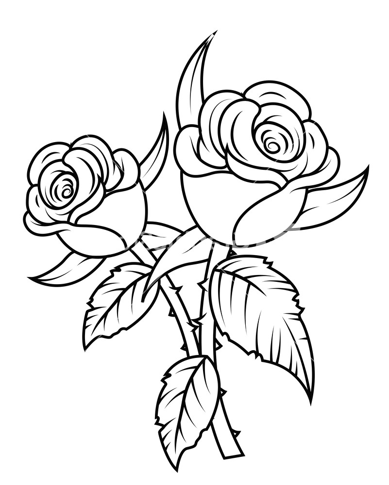 Roses black and white clipart » Clipart Station.
