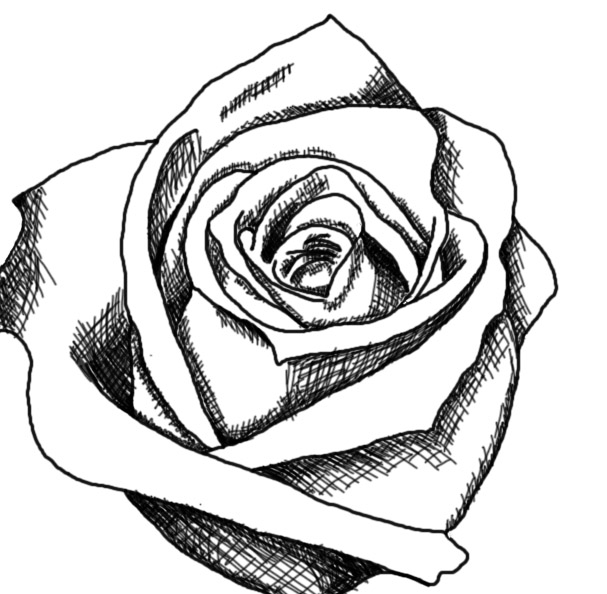 Free Rose Drawings Black And White, Download Free Clip Art.