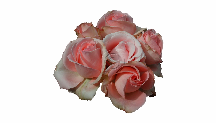 Rose Png Tumblr Free PNG Images & Clipart Download #279496.