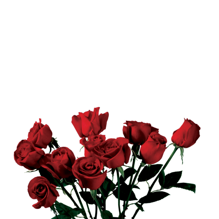Tumblr Rose Png Vector, Clipart, PSD.
