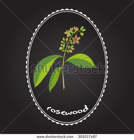 Rosewood Plant Stock Vectors & Vector Clip Art.