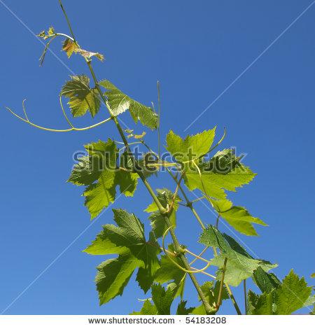 Rosidae Stock fotos, billeder til fri afbenyttelse og vektorer.