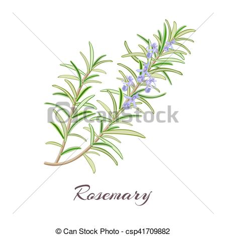 Vector of rosemary.