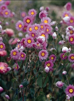 Jim's Favorite Flower Garden Seeds.