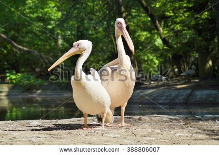 Pelican Stock Images, Royalty.