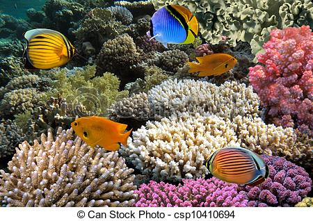 Stock Photographs of Red Sea Coral Reef with Butterflyfish.