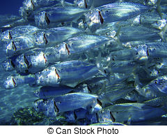 Pictures of School of fish deep under water. Egypt, Red Sea.