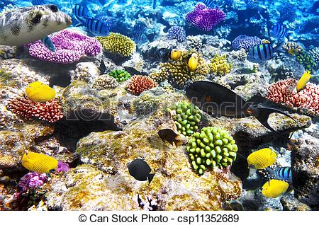 Pictures of Coral and fish in the Red Sea. Egypt, Africa.