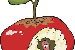 Rotten apple clipart 6 » Clipart Station.