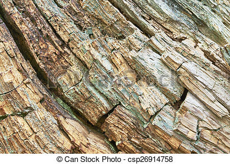 Stock Images of Rotten wood.