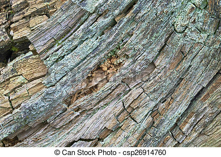 Stock Image of Rotten wood.