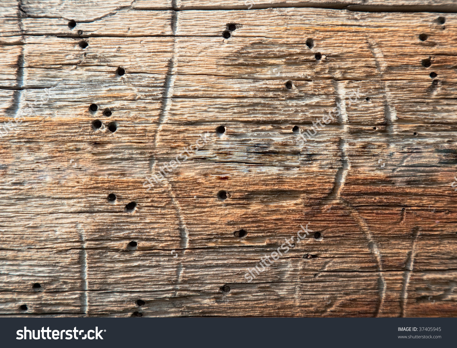 Surface Rotten Wood Holes Made Larvae Stock Photo 37405945.