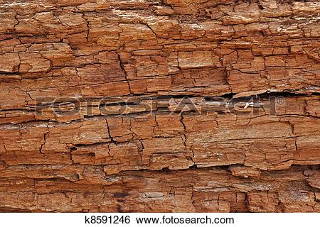 Stock Images of Texture of cracked rotten wood k8591246.