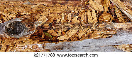 Pictures of Aged rotten wood k21771788.