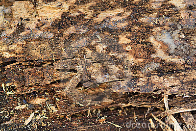 Rotting Wood Stock Photo.