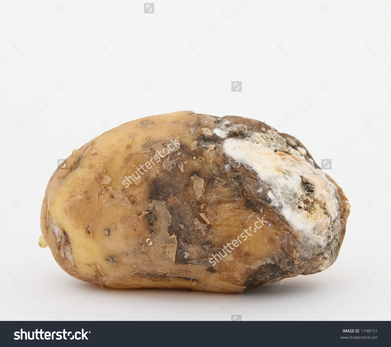 Rotten Potato Copy Space Isolated On Stock Photo 1748151.