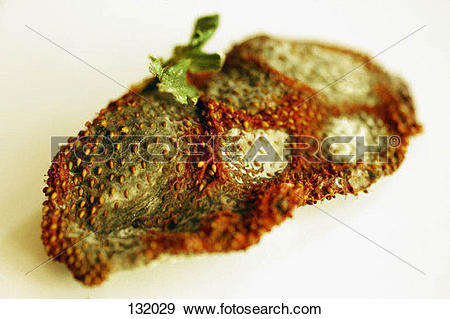 Stock Photograph of Rotten potato 132029.