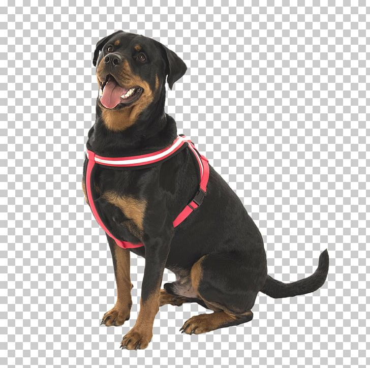 Rottweiler Puppy Dog Breed Leash Snout PNG, Clipart, Animals.