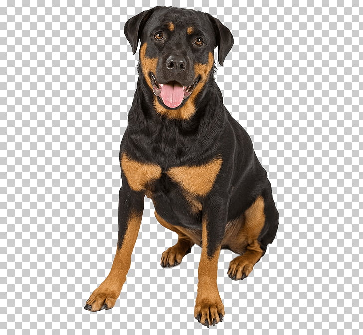 The Rottweiler Puppy German Shepherd Dachshund, puppy PNG.