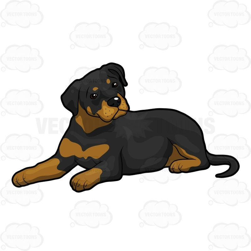 Pin by Sue Stamatien on Rottweilers.
