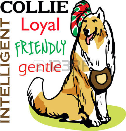 101 Rough Collie Stock Illustrations, Cliparts And Royalty Free.