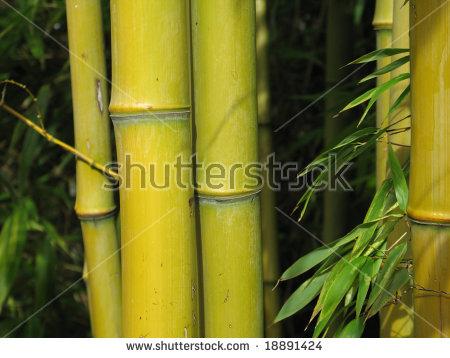 Bamboo Close Up Stock Photos, Royalty.