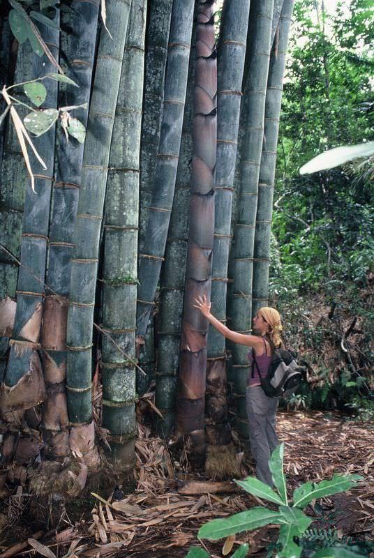 1000+ ideas about Bamboo Garden on Pinterest.