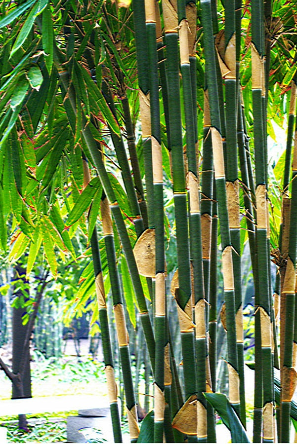 1000+ images about Bamboo on Pinterest.