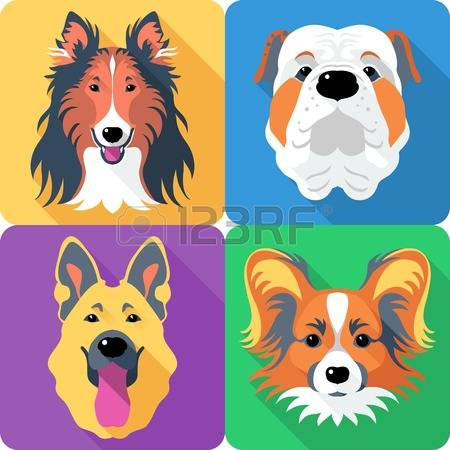 99 Collie Rough Stock Vector Illustration And Royalty Free Collie.