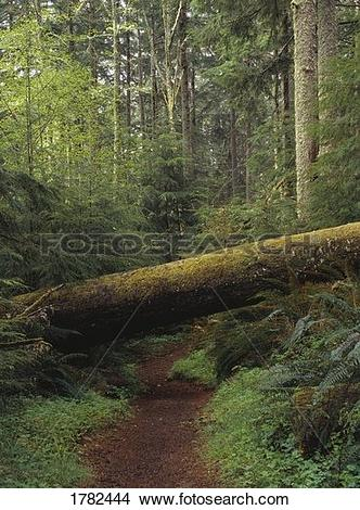Stock Photo of Rough hiking trail 1782444.