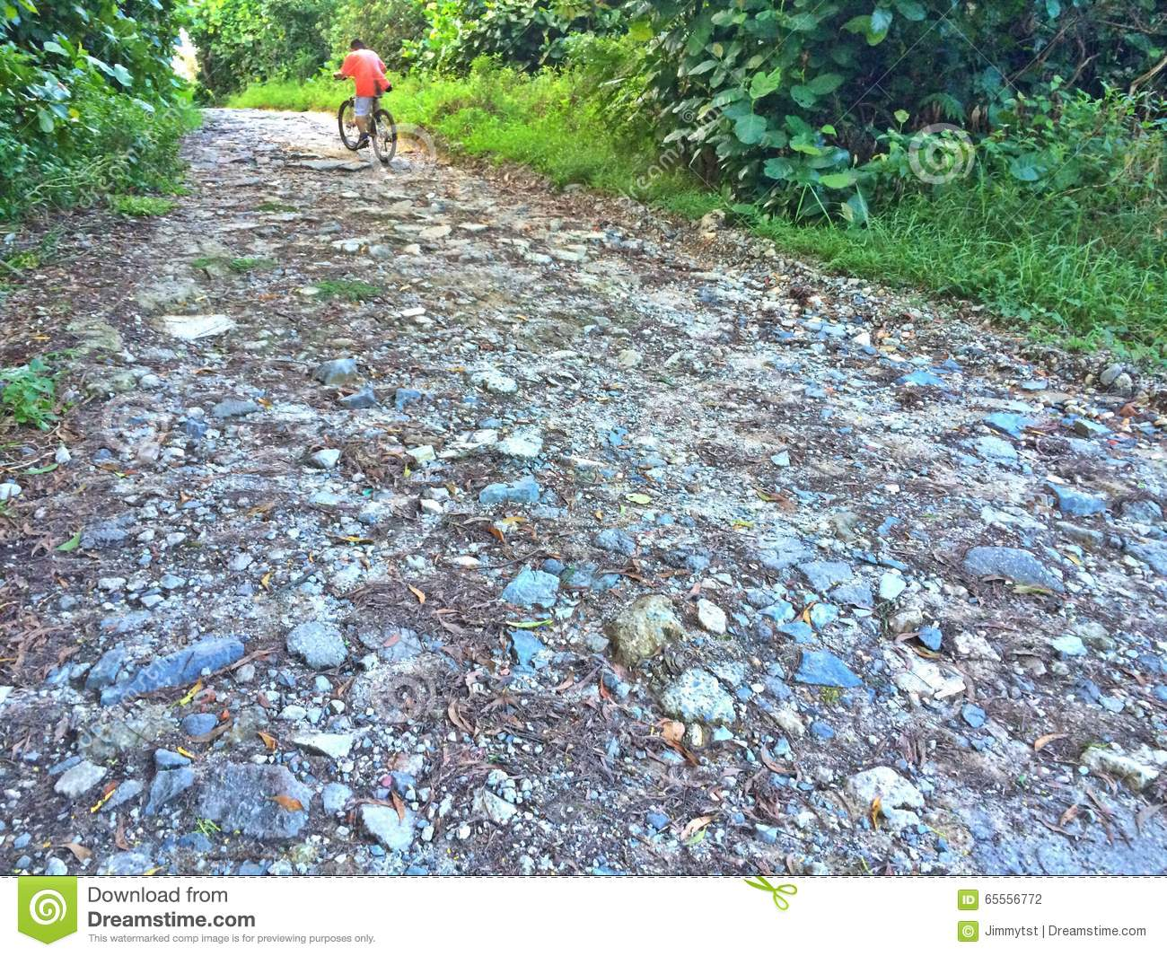Mountain Bike Path Stock Photo.