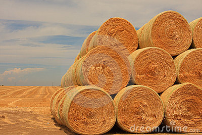 Stack Up Round Bales Of Hay Stock Photography.