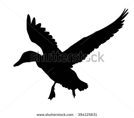 Duck Stock Images, Royalty.